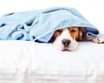 Vômito em cães e gatos - O que fazer quando os pets vomitam