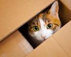Brincadeiras com Gatos - Diversão para você e seu bichano