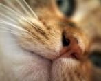 Gatos agressivos – Motivos e soluções