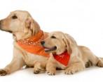 Moda Pet - Seu pet seguindo as últimas tendências fashion