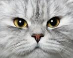 10 curiosidades sobre gatos reveladas