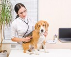 Eletroquimioterapia em cães e gatos