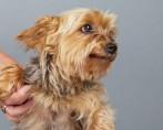 Mielografia para cães e gatos