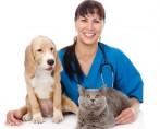 Sistema de gestão veterinário