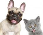 Sistema de gestão para clínicas e pet shops