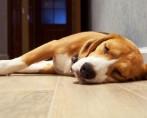 Câncer em cachorro - Saiba tudo sobre essa terrível doença em cães