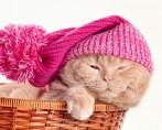 Gripe em Gatos - Como identificar, prevenir e remediar