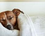 10 Cuidados com a Temperatura do Cão