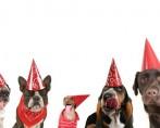 Buffet para Cachorro - Festas caninas!