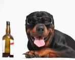 Cerveja para Cachorro - Petiscos especiais!