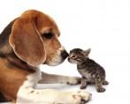 Mercado de Animais - Cuidados ao escolher o canil ou o gatil