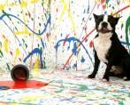 Cães Bagunceiros - Como lidar com um pet destruidor