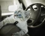 Leis para Transporte de Animais - Como funcionam?
