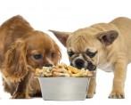 Ração para Cães - Qual comprar e como armazenar?