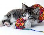 Jogos com Gatinhos – Dicas de como seu peludo pode se divertir