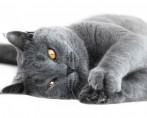 Unhas de Gato - Como cuidar das garras do bichano