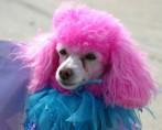Tintura para Pets - Dicas para tingir seu pet com segurança