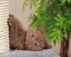 5 Problemas de Gato Mais Comuns