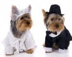 Cachorros nos Casamentos – Uma moda que pegou