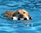 Natação para Cachorro - Saúde e diversão
