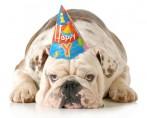 Festas de Cachorro - Comemorando com segurança