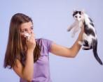 Alergia a Gatos - Quem é o vilão, o pelo ou a saliva?