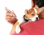 Parvovirose Canina - Conheça a doença e saiba como prevenir seu pet