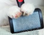 Escovar Pelo de Cachorro - Os instrumentos e as maneiras certas