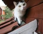 O Gato é Independente?
