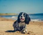 30 Frases de Cachorros sobre Amor e Amizade