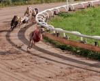 Corridas de Cachorro - Esportes perigosos