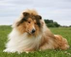 Cães famosos na história e seus feitos impressionantes