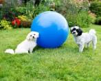 Hospedagem de Cães - Dicas e cuidados importantes