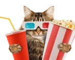 6 Filmes com gatos para divertir toda a família