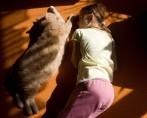 Felinos e crianças – Uma amizade que pode dar certo