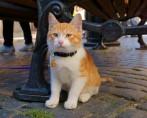 Coleira de gato – Saiba mais sobre esse acessório