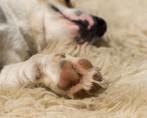 Epilepsia canina – Os perigos e os cuidados com essa doença