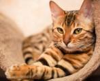 Castração de gatos em todos os detalhes