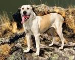 Cachorro heroi – As quatro patas que salvam vidas sem ter capa voadora