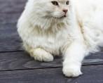 Dicas sobre Fontes para Gatos