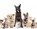 Cachorros – Incríveis curiosidades sobre os pets caninos!
