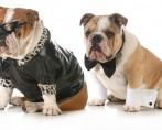 Modelos de roupas para cachorro – Pets cada vez mais modernos