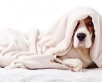 Gripe em cães – Identificando e tratando o pet gripado