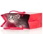 Pet Shop para gatos - Saiba como escolher o ideal