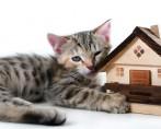 Quero comprar um gatinho, o que fazer?