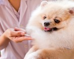 Banho e Tosa – Como abrir um negócio pet?