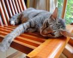 Raiva em gatos – Sintomas e prevenção