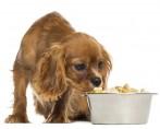 Meu cachorro não come ração, o que eu faço?