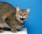Gato arisco – Como lidar com meu felino bravo?