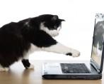 Gatos famosos – Bichanos que se tornaram fenômenos da internet